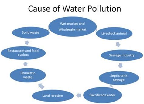 Directed Writing: Report on Water Pollution Essay Example